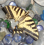 butterfly with broken wings, glass beads and pebbles